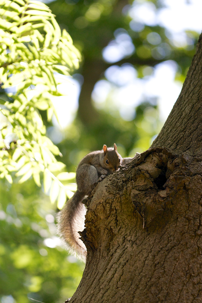 Photograph Squirrel by James Johnson on 500px