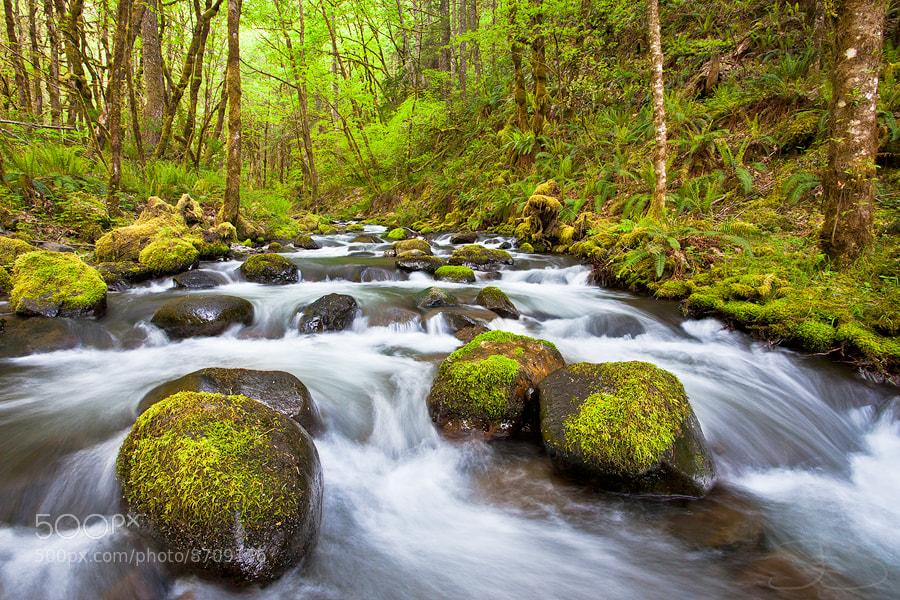 Photograph Gorton Creek by Joseph Balcken on 500px