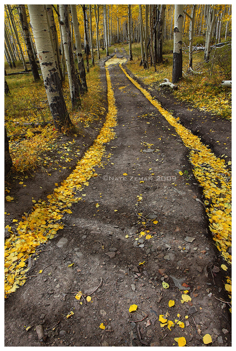 Photograph The Golden Road by Nate Zeman | natezeman.com on 500px