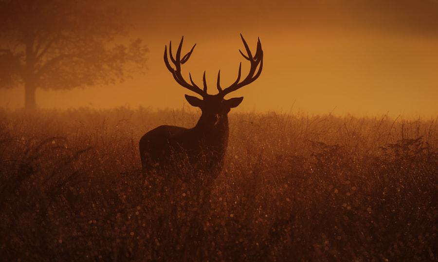 Deer stag! by Inguna Plume on 500px.com