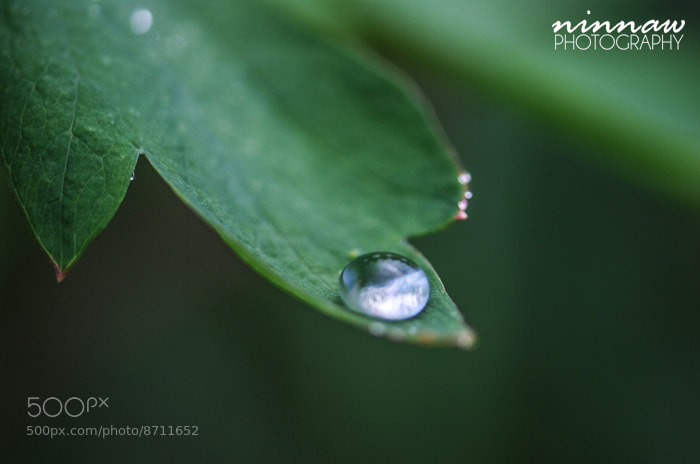 Photograph Drop by Ninna Wallenborg on 500px