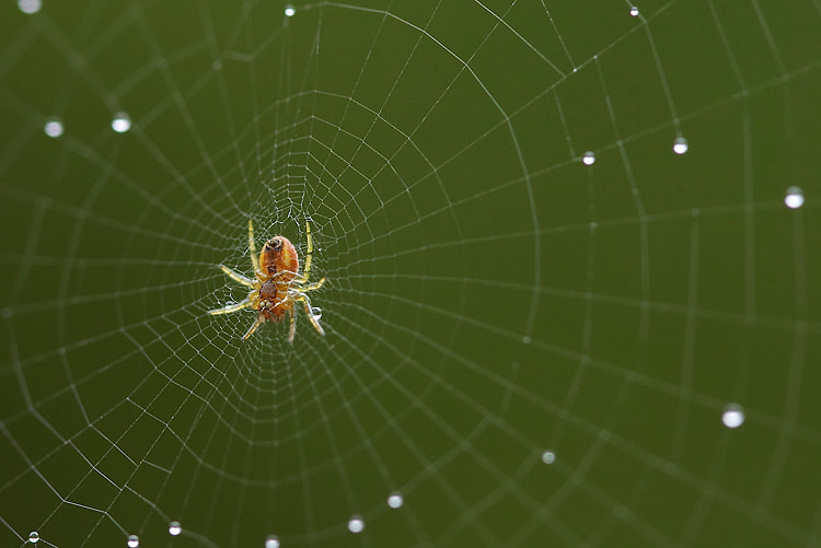Photograph Spider Web by Nicolas Dory on 500px