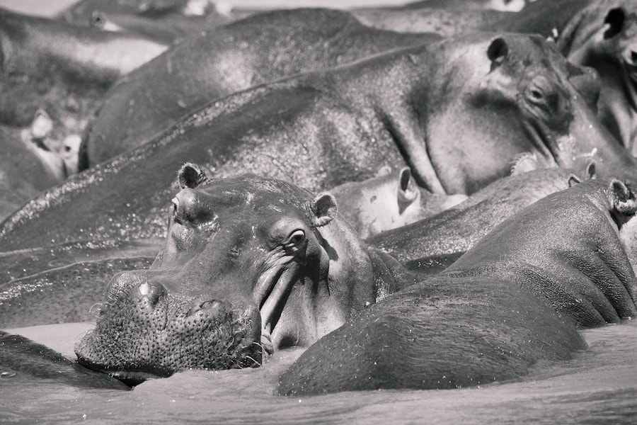 Photograph Hippo Watch by vicky  fry on 500px