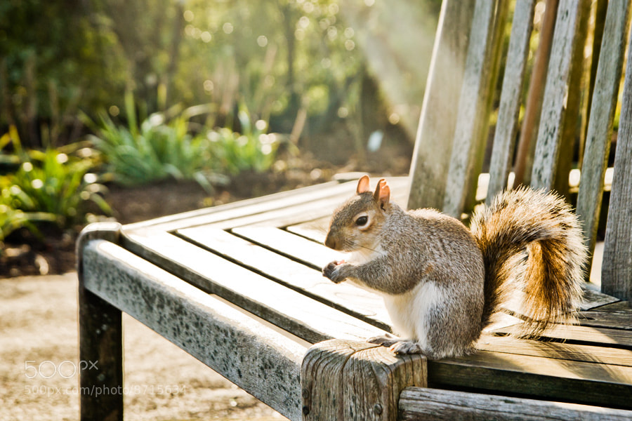 Photograph Squirrel by Gabriel Lima on 500px