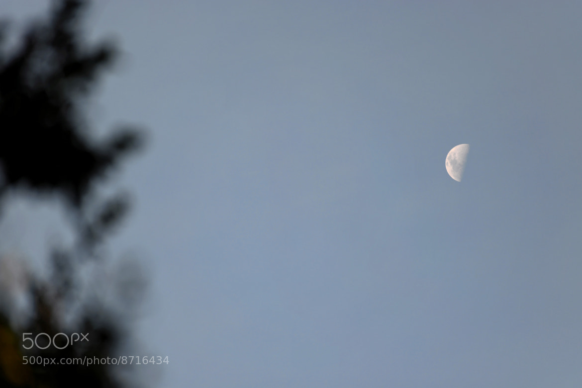 Photograph Half Moon at dusk by Lin Zee on 500px