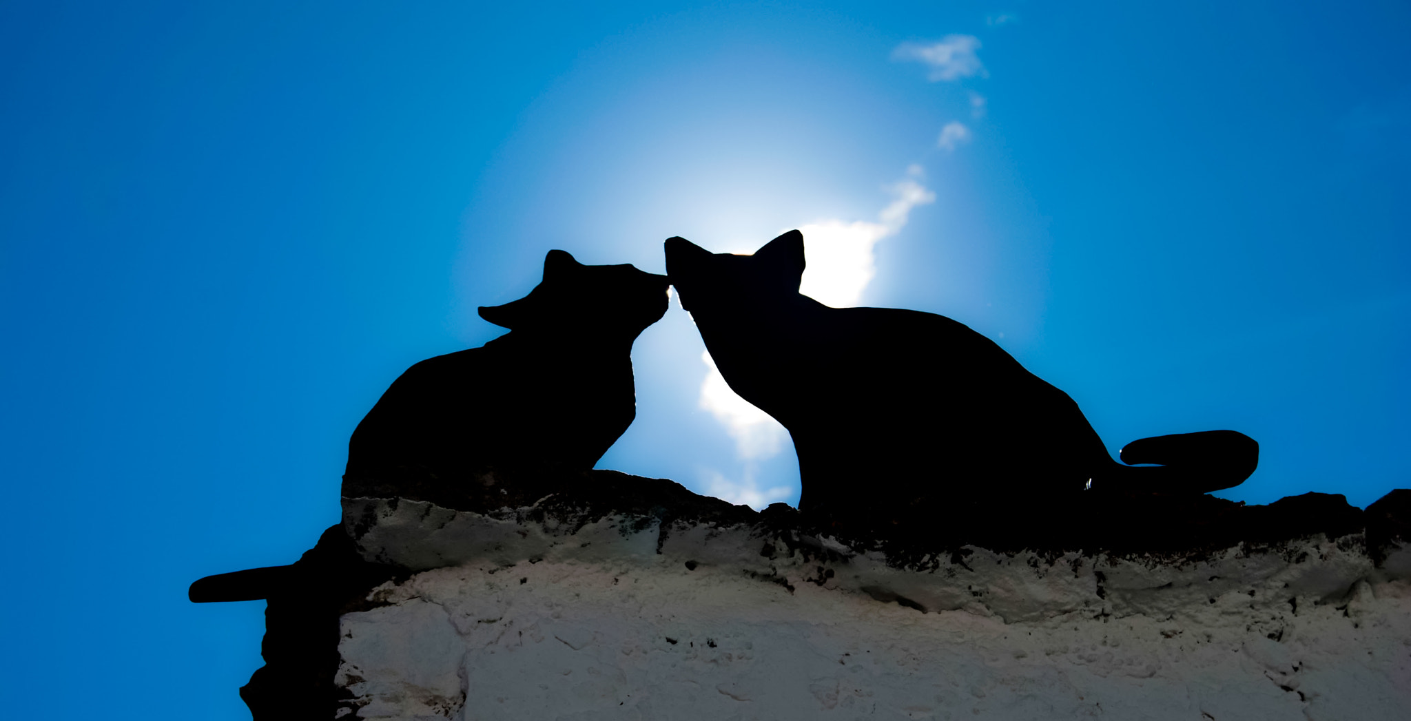 Photograph Kiss me Cat by David Fayos  on 500px