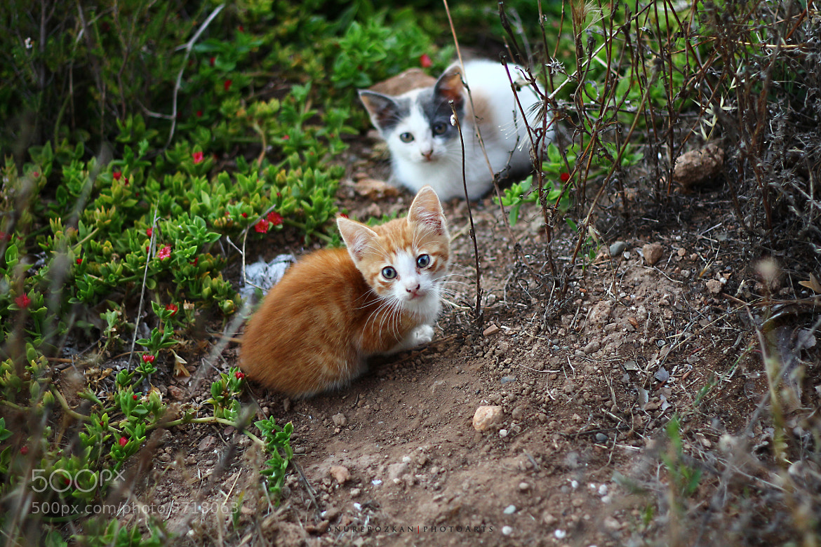 Photograph Kitties by Onur Erozkan on 500px