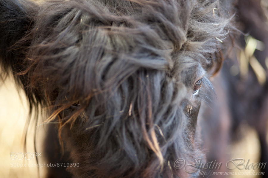 Photograph Bad Hair Day by Justin Bloom on 500px