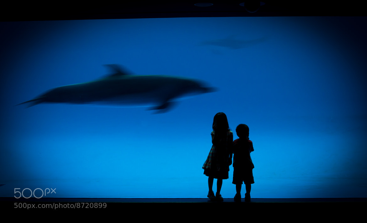Photograph Dolphin in Blue by Kris Boorman on 500px