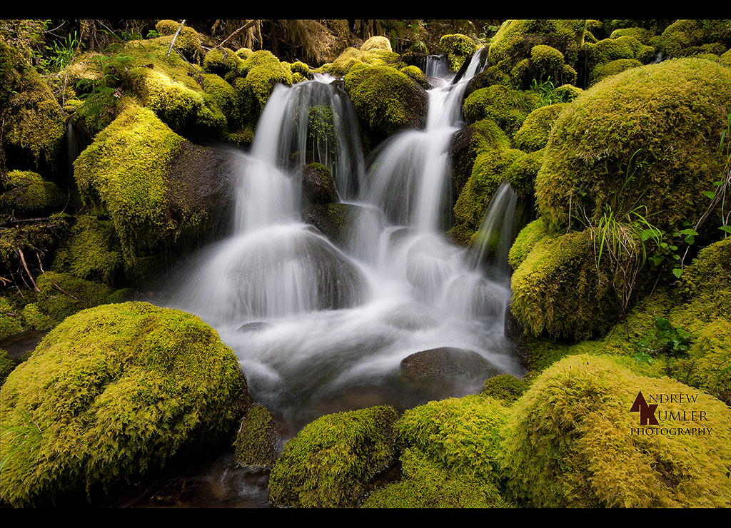 Photograph Mossy... by Andrew Kumler on 500px