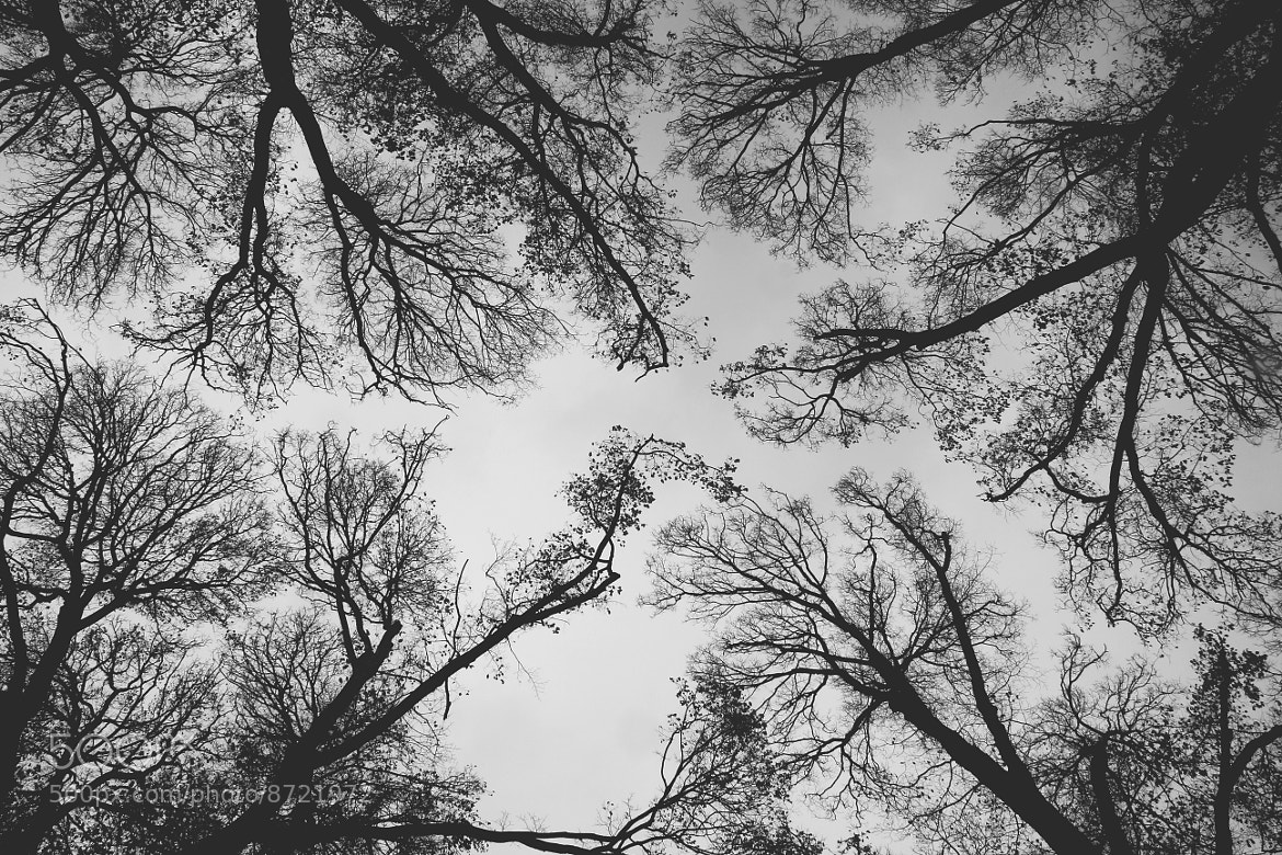 Photograph Spooky Trees by Mohammed Attar on 500px