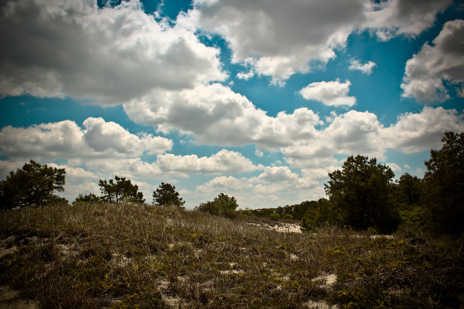 Photograph Cape Henlopen Dunes by Paul Ney Photography on 500px