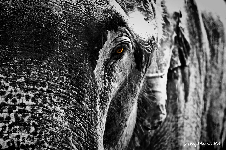 Photograph Sad Story by Suradej Chuephanich on 500px