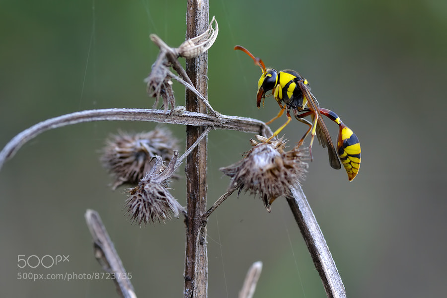 Photograph The Yellow Jacket by Donald Jusa on 500px