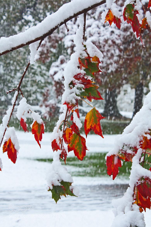 Photograph Autumn Snow by Austin MacDougall on 500px