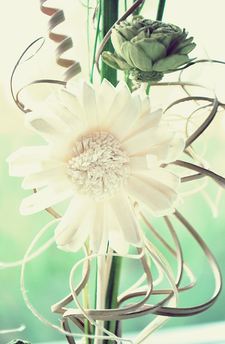 Photograph Fleur Blanche by Cayla Baluyot on 500px