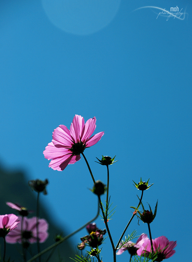 Photograph High Hill Flora by Mohan Duwal on 500px