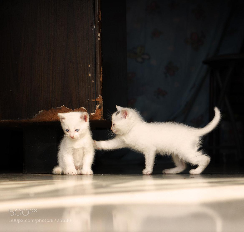 Photograph Friendship by Yuqiu Zheng on 500px