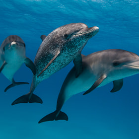 Dolphin Portrait by Scott Portelli (ScottPortelli)) on 500px.com