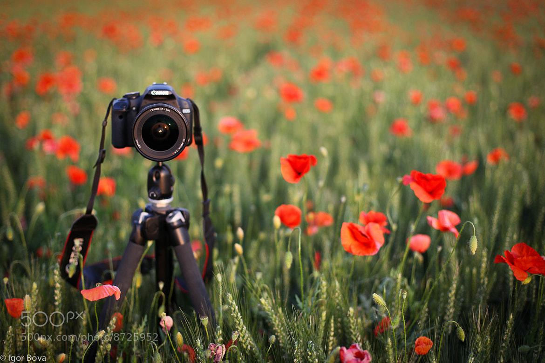 Photograph Do you love me? by Igor Bova on 500px