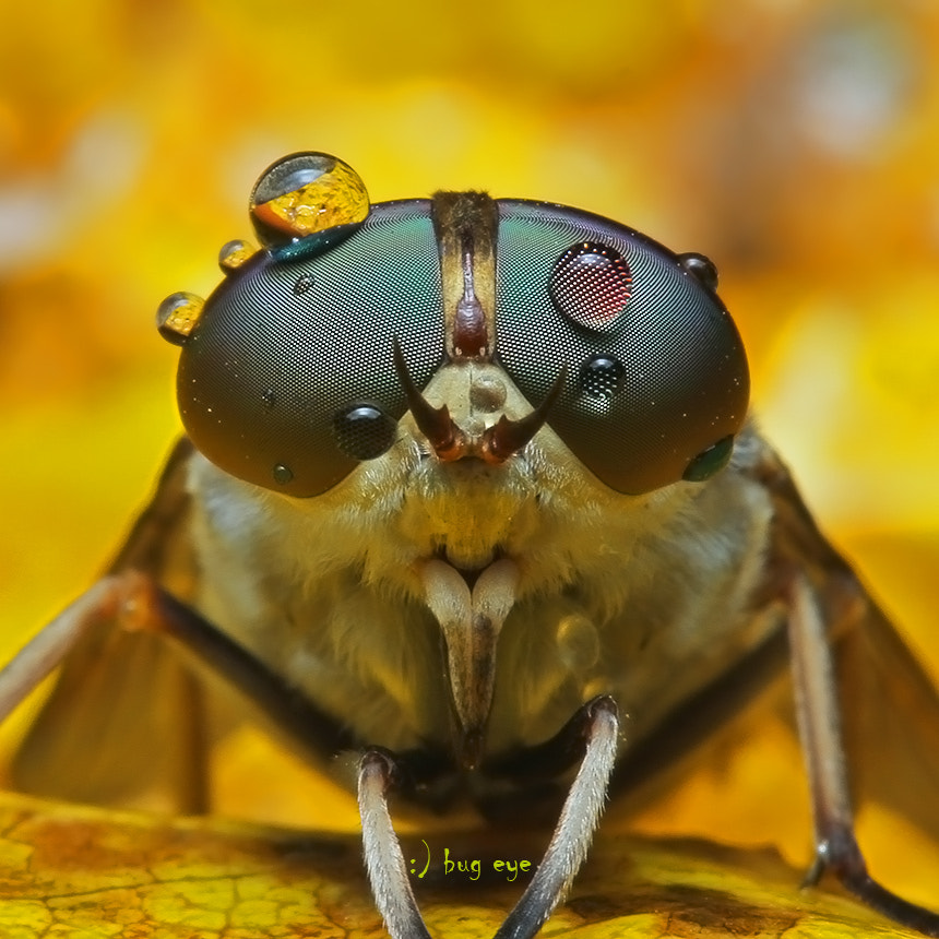 Photograph lo_ok at me by bug eye :) on 500px