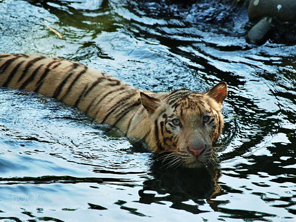 Photograph soak in water by Irawan Subingar on 500px