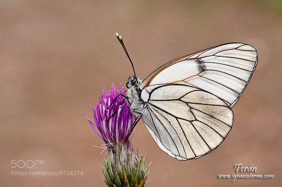 Photograph Mariposa I by Jose Ignacio Teran on 500px