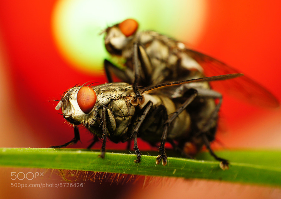 Photograph Big Eye Fly by Hong Coffee on 500px