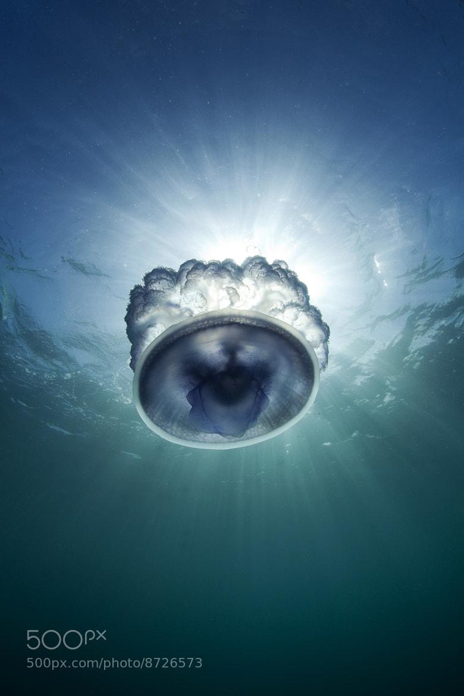 Photograph Jellyfish Starburst by Scott Portelli on 500px