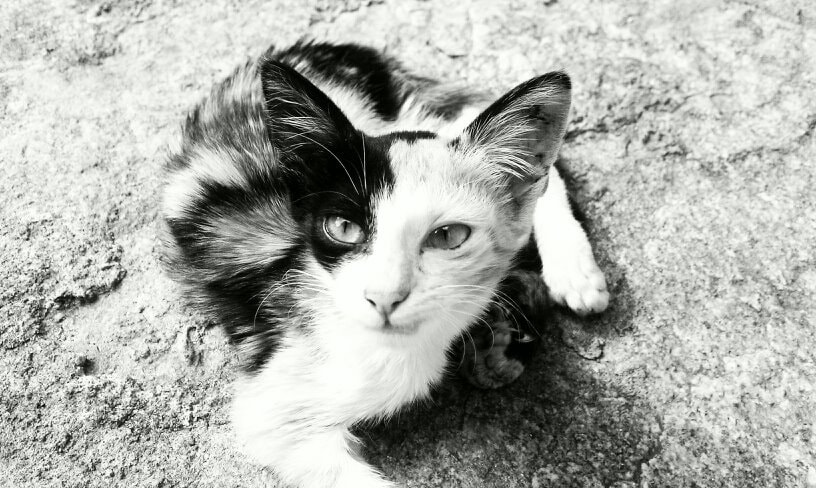 Photograph BW cat by Kiran Ruth on 500px
