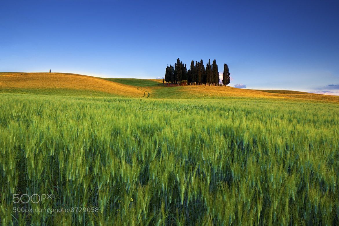 Photograph Cypress Groove by Garry Schlatter on 500px