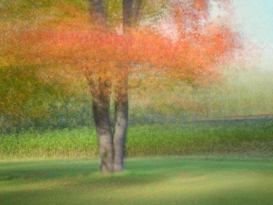 Maple autumn colors