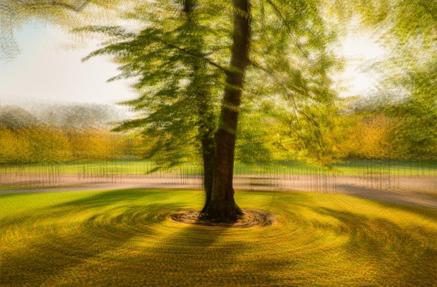 Round a tree