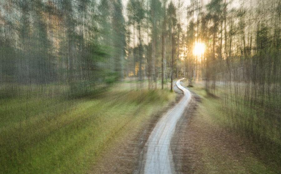 Path through the marsh