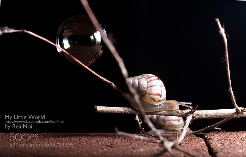 Photograph Little Snail by RealNoi Chunhavareekul on 500px