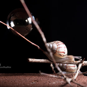 Little Snail by RealNoi Chunhavareekul (RealNoi)) on 500px.com