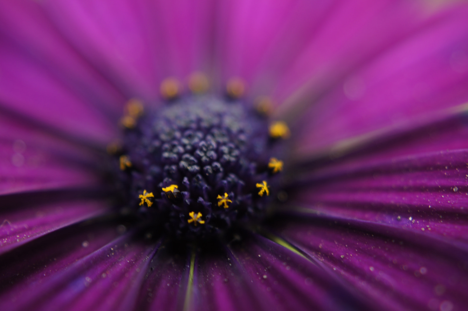 Photograph blooming nature. by Afzal Khan on 500px