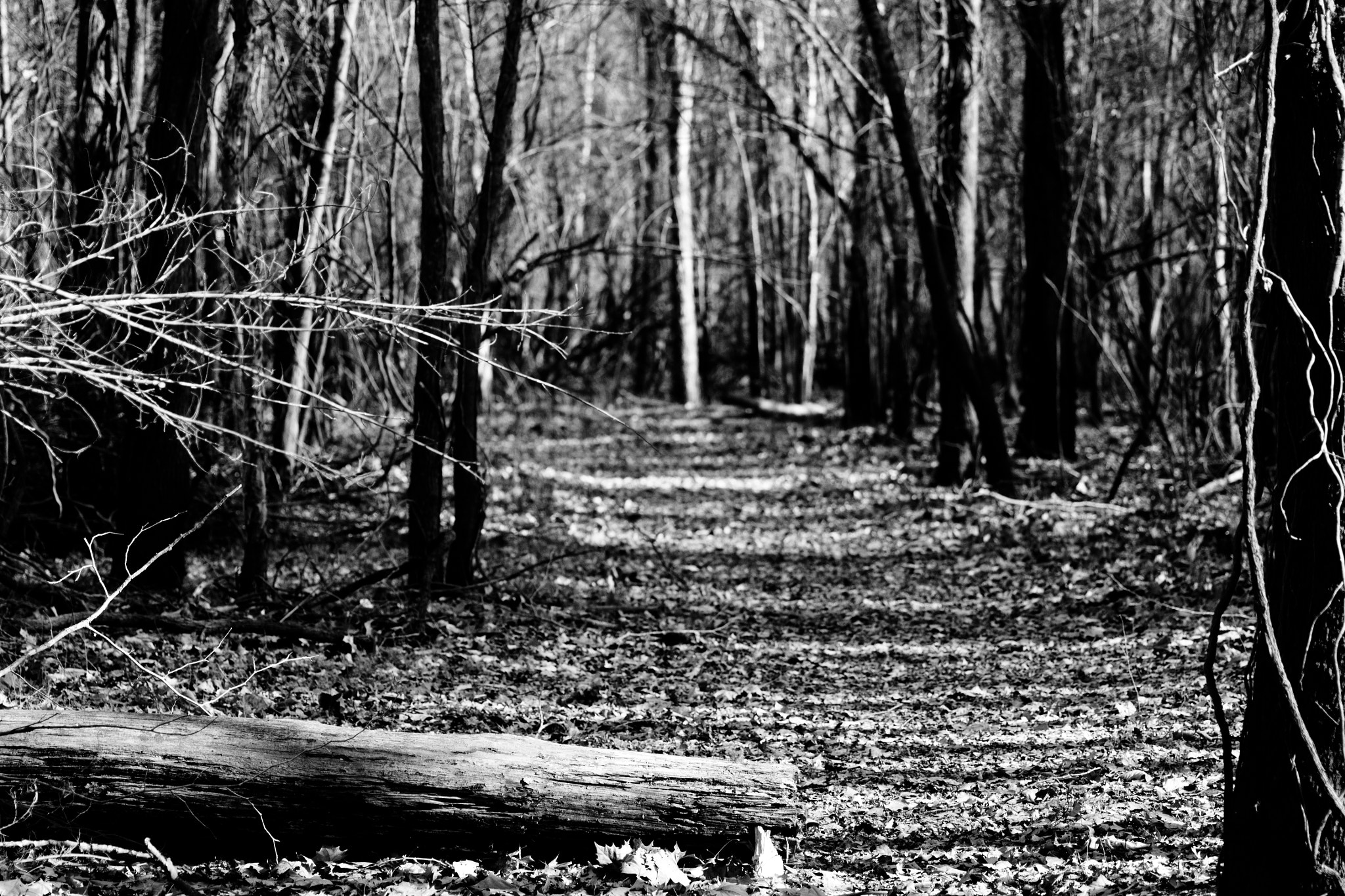 Photograph Trail In The Woods by Joey Bamburg on 500px