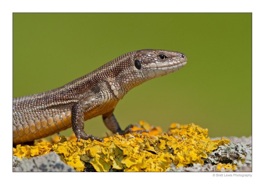 Photograph Little Dragon.. by Brett Lewis on 500px
