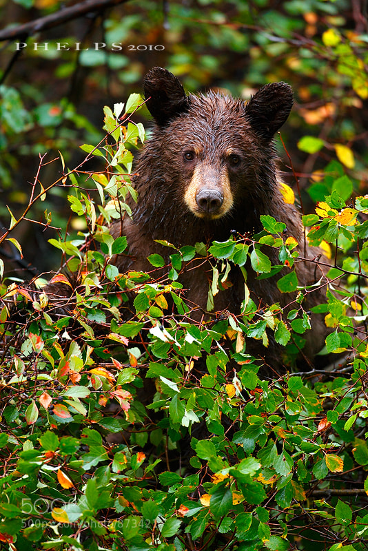 Photograph Berry Bear by Ian  Phelps on 500px