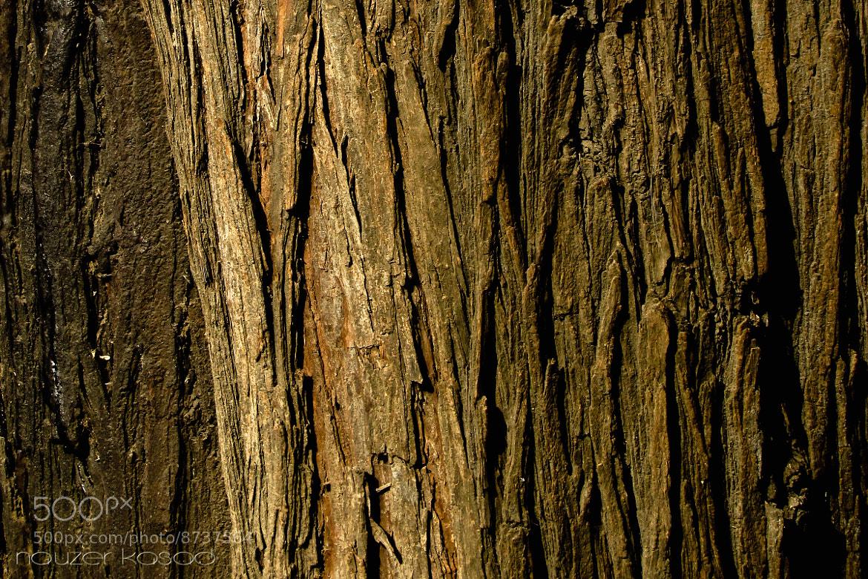Photograph texture by Nauzer Kasad on 500px