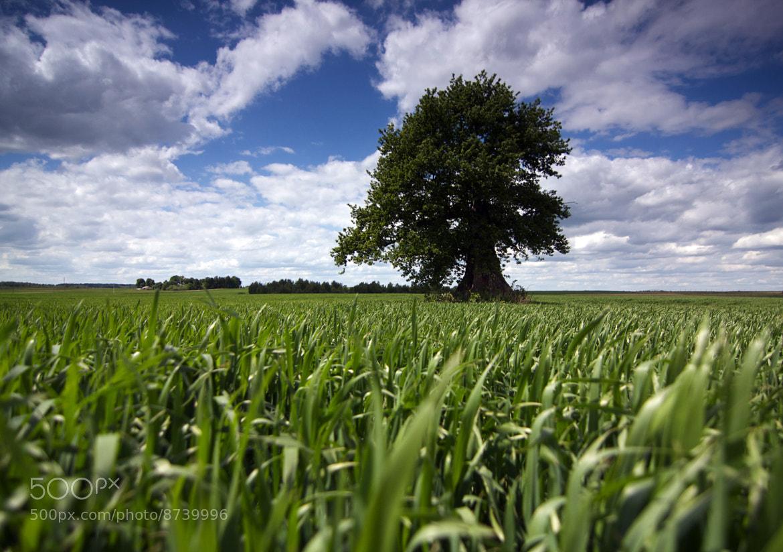 Photograph Old oak by Skaidris Bielskis on 500px