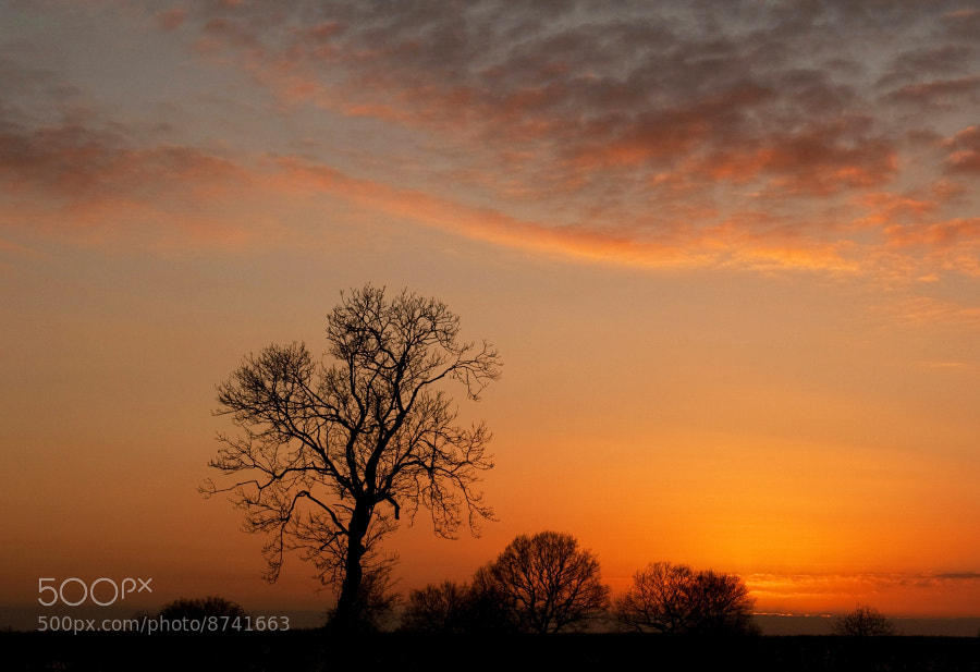 Gayton Wilds Northamptonshire,UK