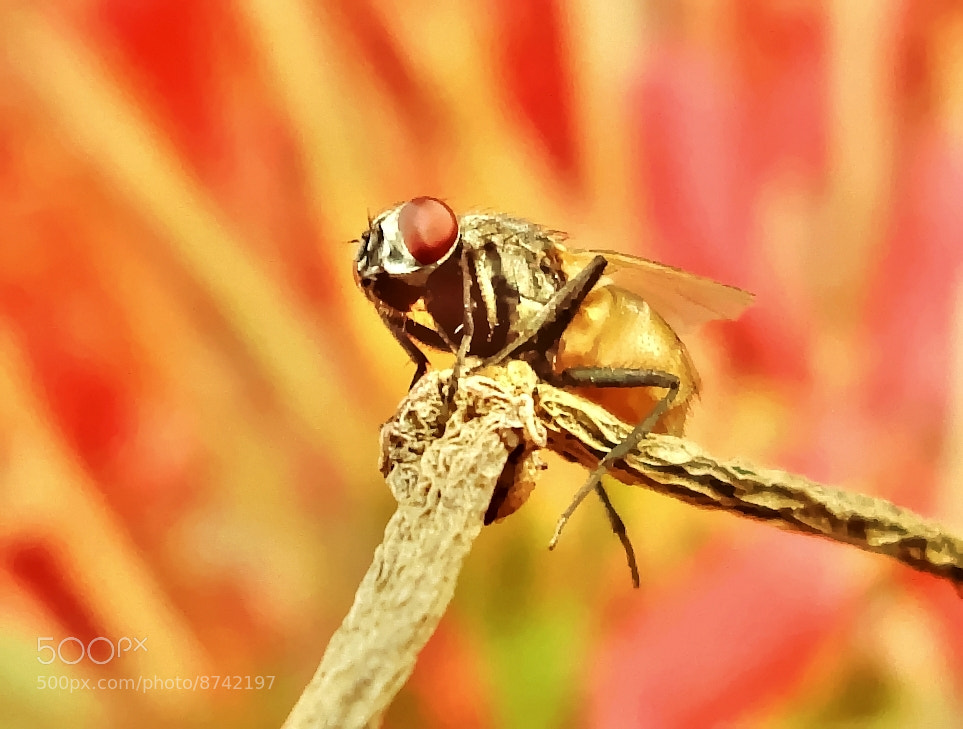 Photograph Relaxing by Premkumar Antony on 500px