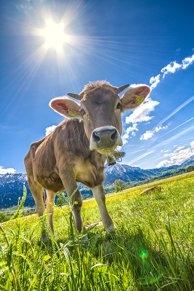 Photograph moo by Torsten Hufsky on 500px