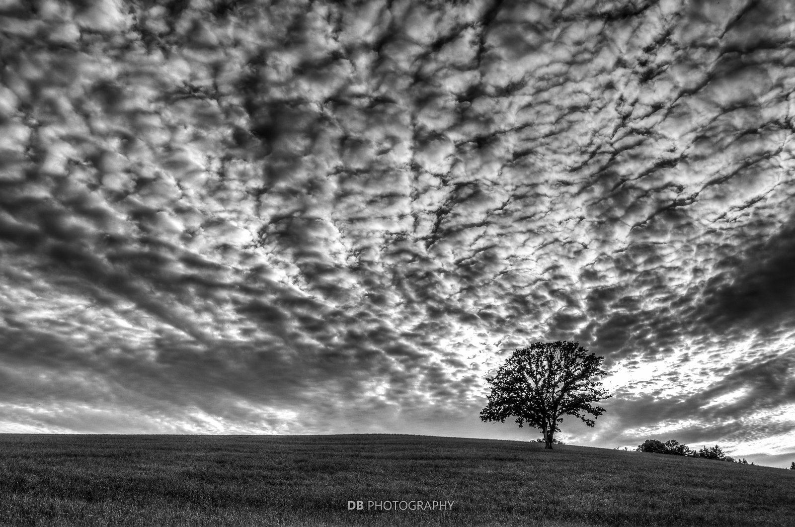 Photograph Tree by Hans Weichselbaumer on 500px