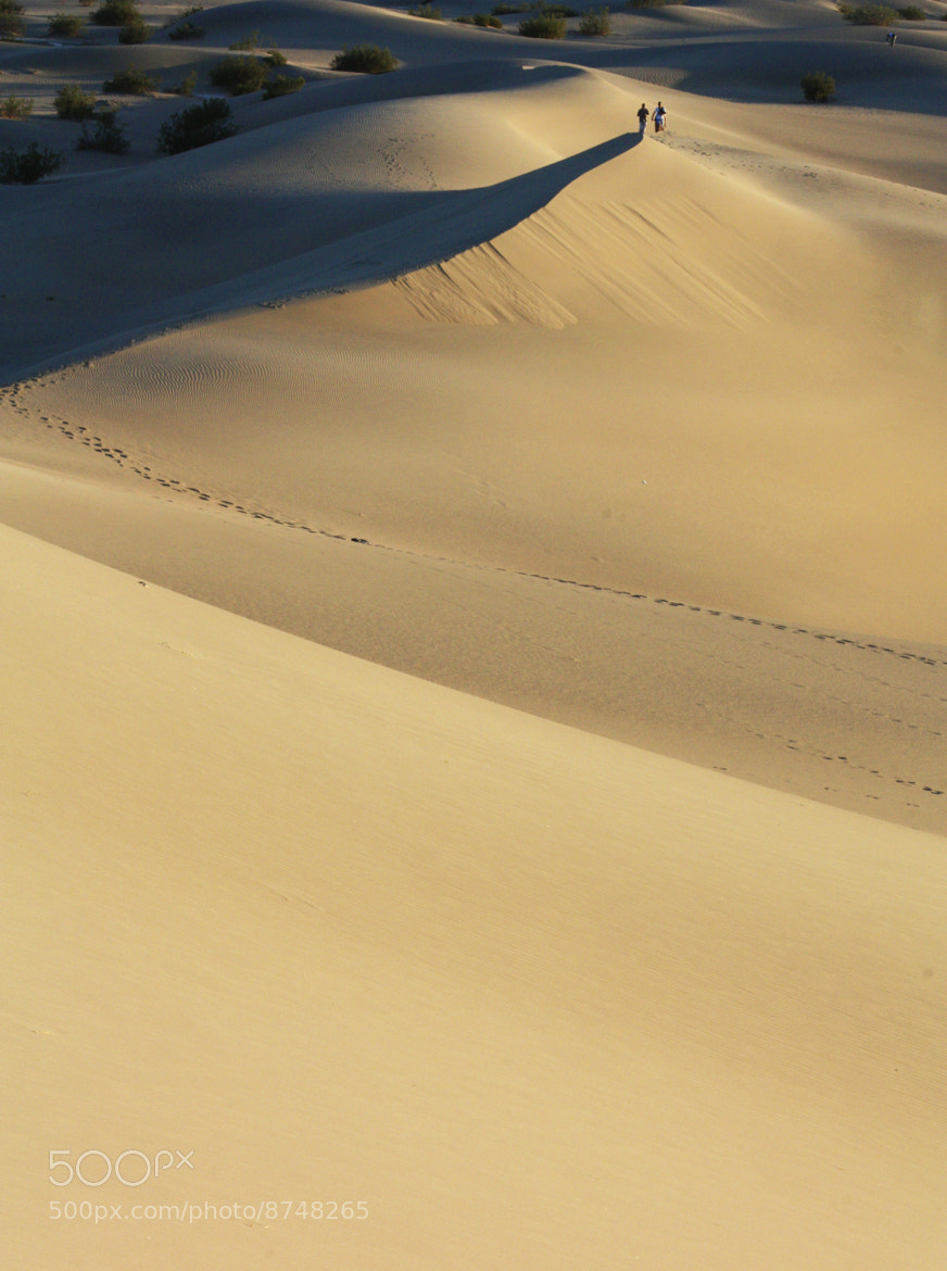 Photograph Dunes by Rosie Cheeks on 500px