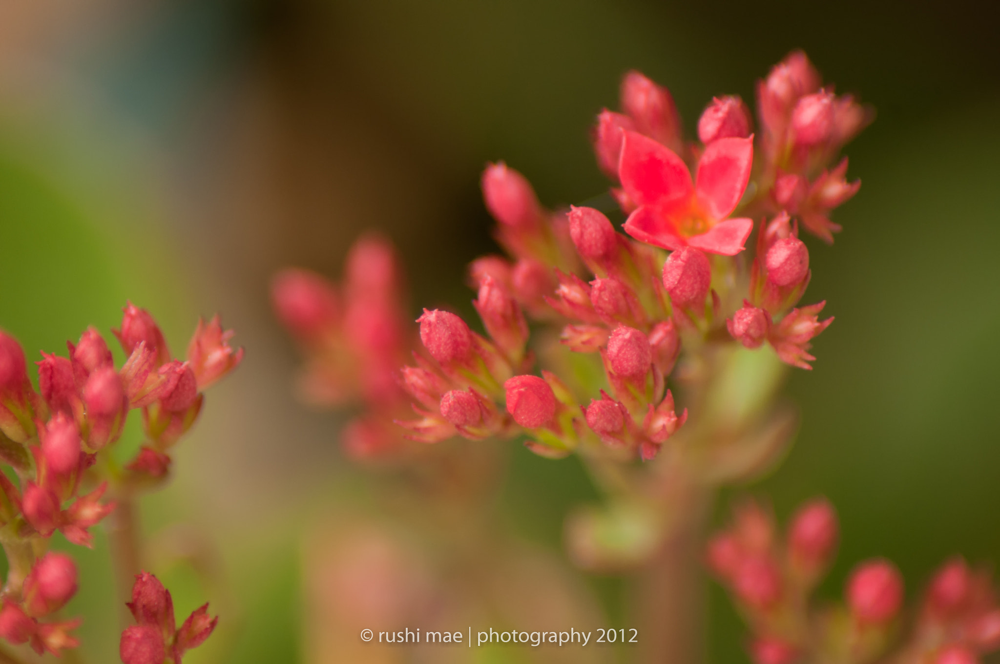 Photograph Flora by Shirly Dumaguit-Tolete on 500px