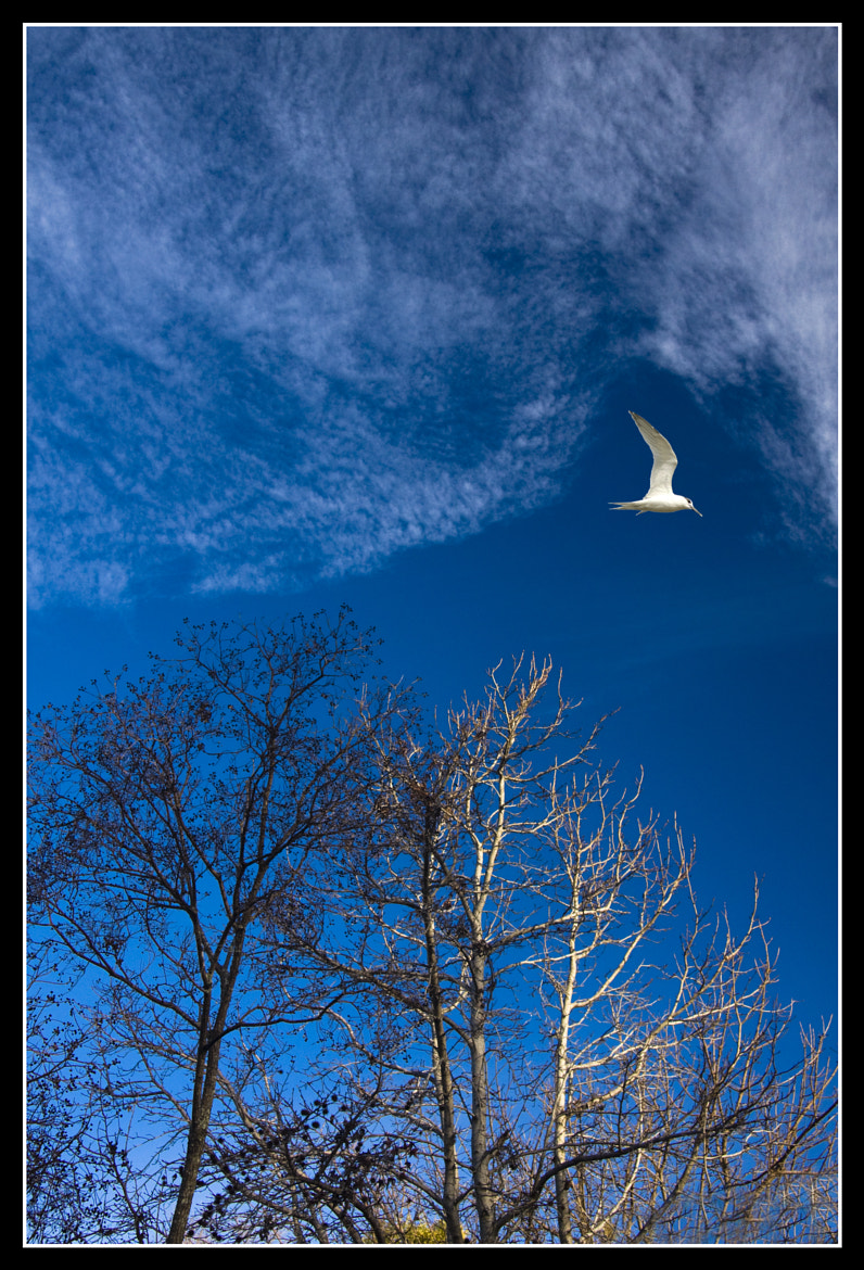 Photograph Flying high by Rajdev S on 500px