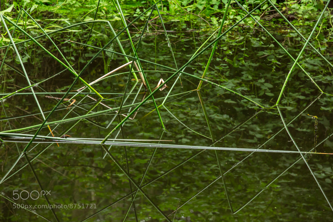 Photograph Natural Lines by Joseph Calev on 500px
